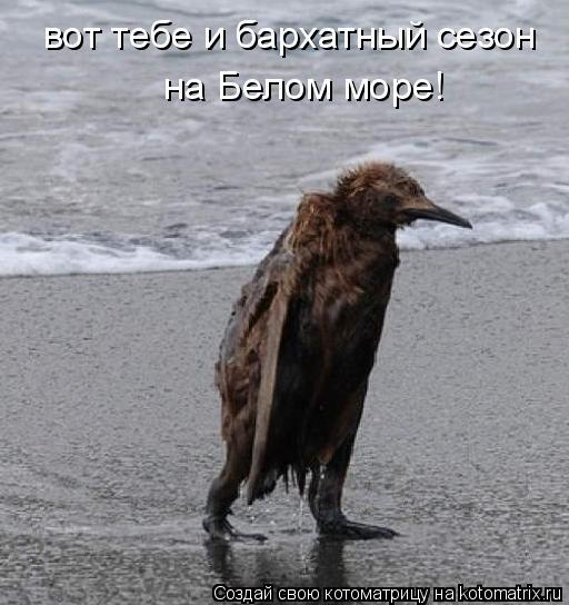 Котоматрица: вот тебе и бархатный сезон   на Белом море!