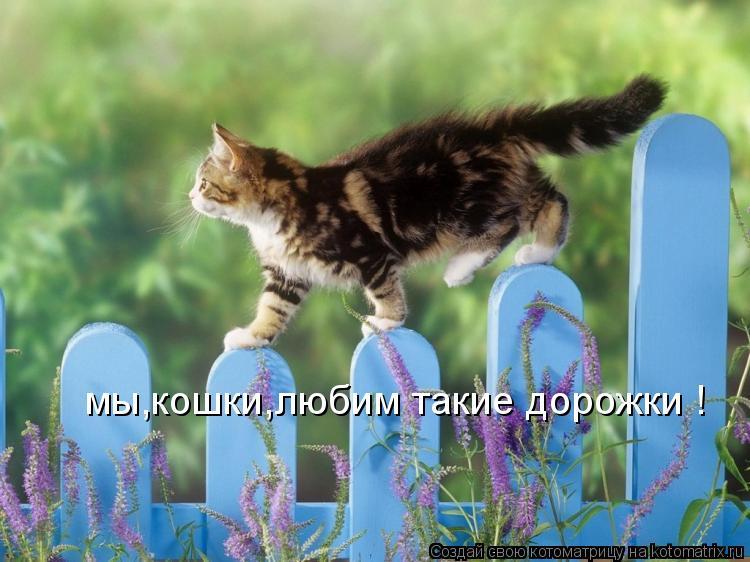 Котоматрица: мы,кошки,любим такие дорожки !