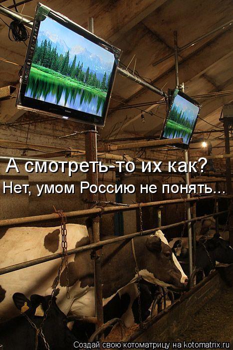 Котоматрица: А смотреть-то их как? Нет, умом Россию не понять...