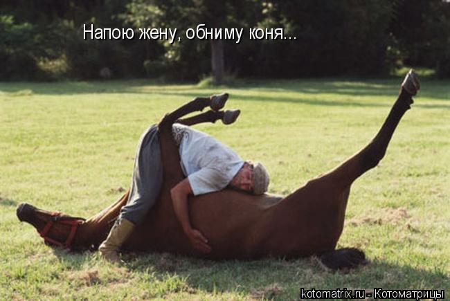 Котоматрица: Напою жену, обниму коня...