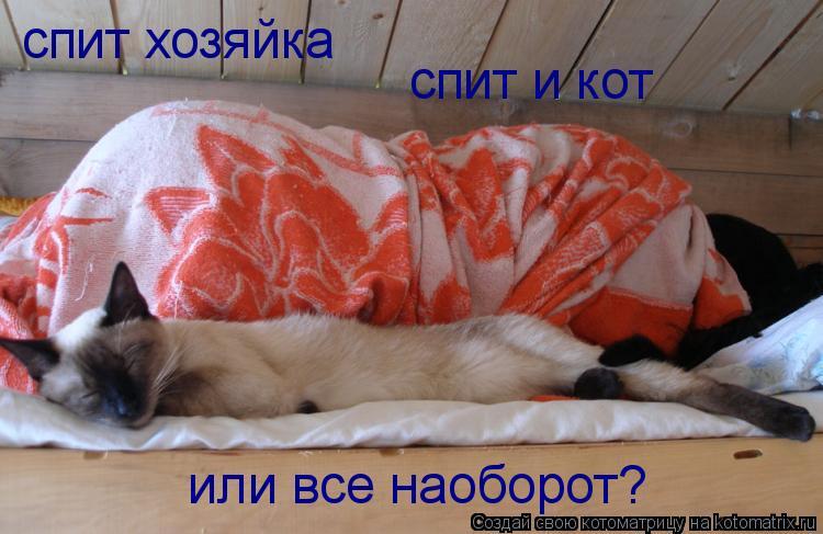 Котоматрица: спит хозяйка спит и кот или все наоборот?