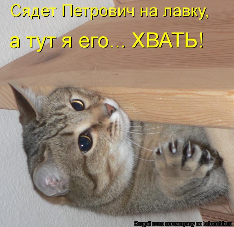 Котоматрица: Сядет Петрович на лавку,  а тут я его... ХВАТЬ!