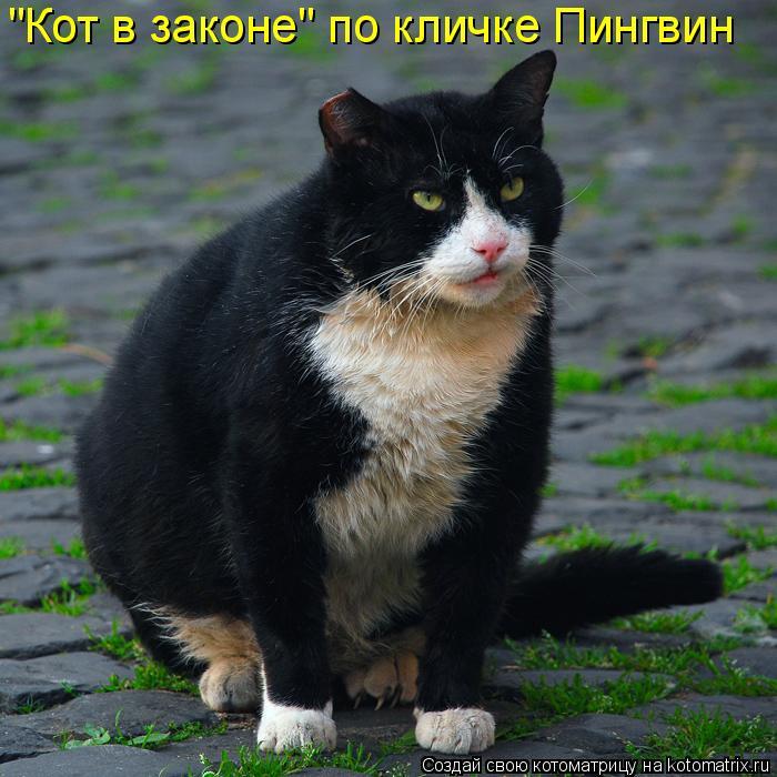 """Котоматрица: """"Кот в законе"""" по кличке Пингвин"""