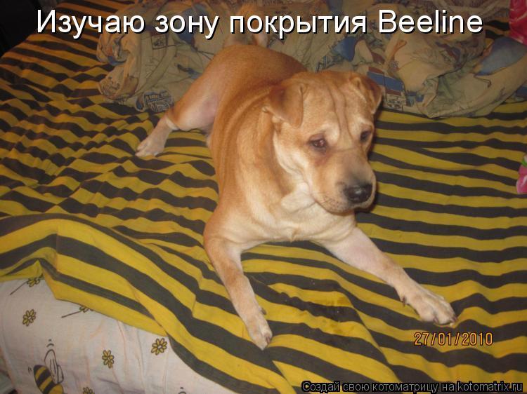 Котоматрица: Изучаю зону покрытия Beeline
