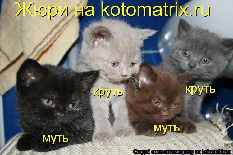 Котоматрица: Жюри на kotomatrix.ru круть круть муть муть