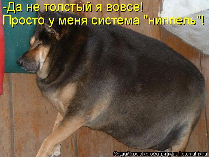 """Котоматрица: -Да не толстый я вовсе! Просто у меня система """"ниппель""""!"""