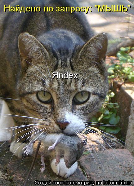 "Котоматрица: Найдено по запросу: ""МЫШЬ"" Яndex"