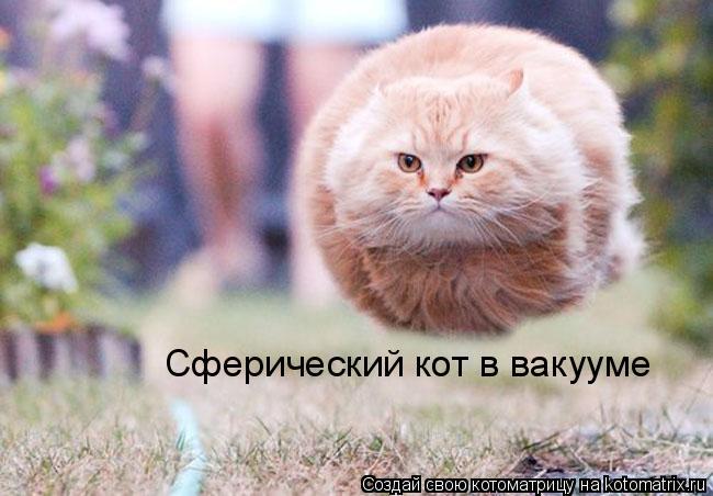 Котоматрица: Сферический кот в вакууме