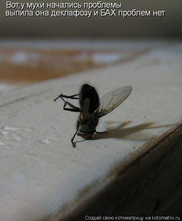 Котоматрица: Вот,у мухи начались проблемы выпила она деклафозу и БАХ проблем нет