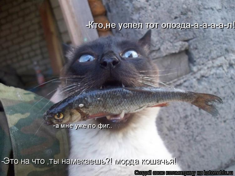 Котоматрица: -Кто,не успел тот опозда-а-а-а-а-л! -а мне уже по фиг.. -Это на что ,ты намекаешь?! морда кошачья!
