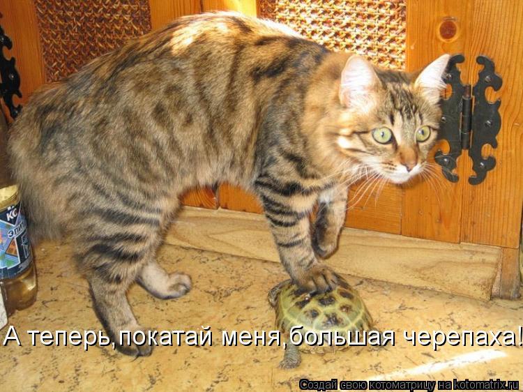 Котоматрица: А теперь,покатай меня,большая черепаха!