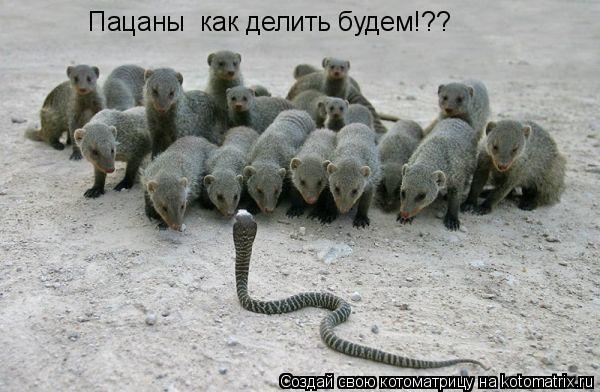 Котоматрица: Пацаны  как делить будем!??