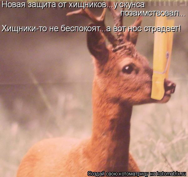 Котоматрица: Новая защита от хищников...у скунса  позаимствовал... Хищники-то не беспокоят...а вот нос страдает!