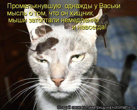 Котоматрица: Промелькнувшую  однажды у Васьки    мысль о том, что он хищник,  мыши затоптали немедленно    и навсегда!
