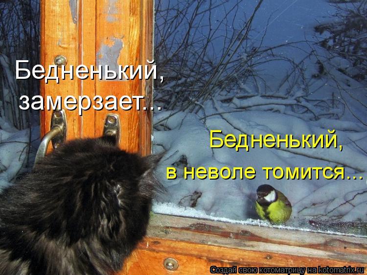 Котоматрица: Бедненький,  замерзает... Бедненький,  в неволе томится...