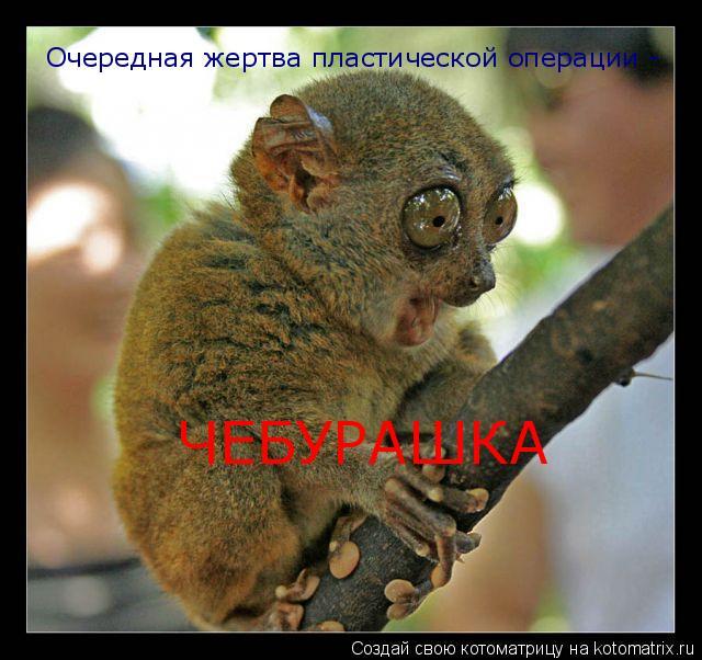 Котоматрица: Очередная жертва пластической операции -  ЧЕБУРАШКА