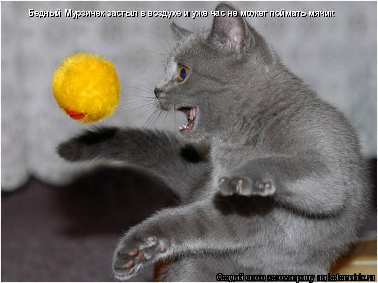 Котоматрица: Бедный Мурзичек застыл в воздухе и уже час не может поймать мячик