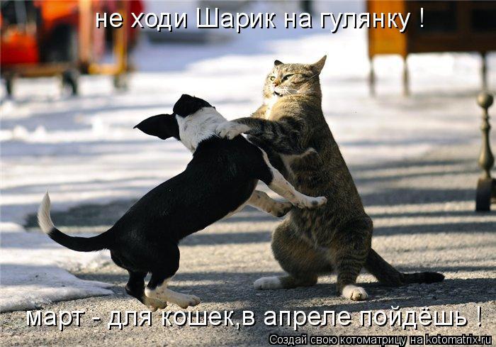 Котоматрица: не ходи Шарик на гулянку ! март - для кошек,в апреле пойдёшь !