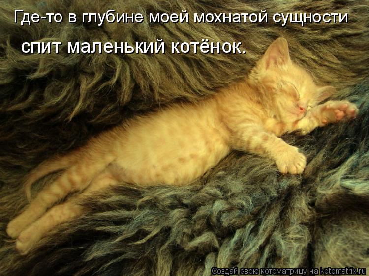 Котоматрица: Где-то в глубине моей мохнатой сущности спит маленький котёнок.