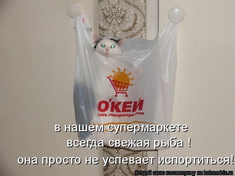 Котоматрица: в нашем супермаркете  всегда свежая рыба !  она просто не успевает испортиться!