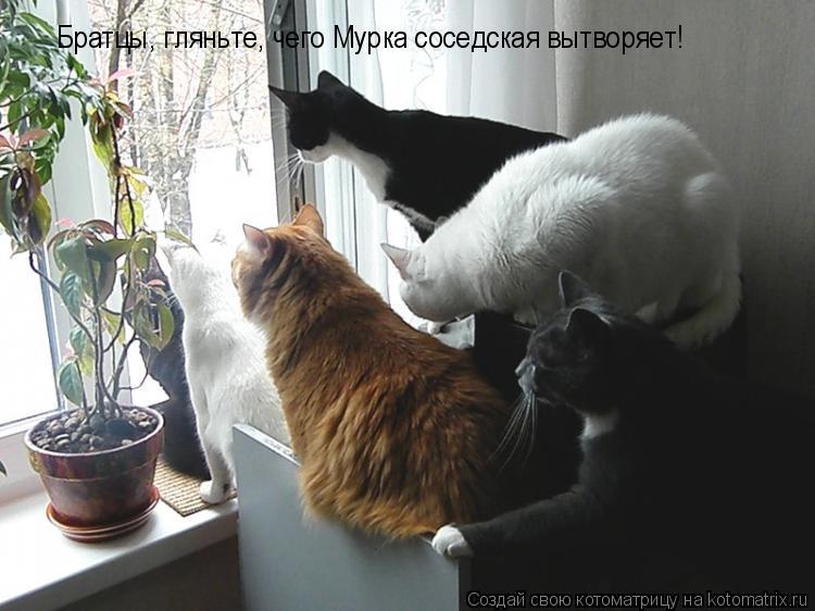 Котоматрица: Братцы, гляньте, чего Мурка соседская вытворяет!