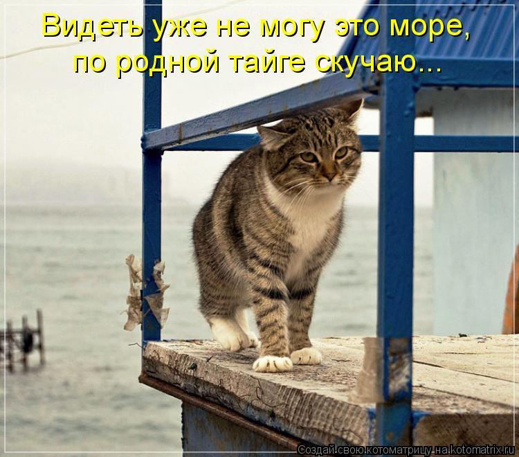 Котоматрица: Видеть уже не могу это море,  по родной тайге скучаю...