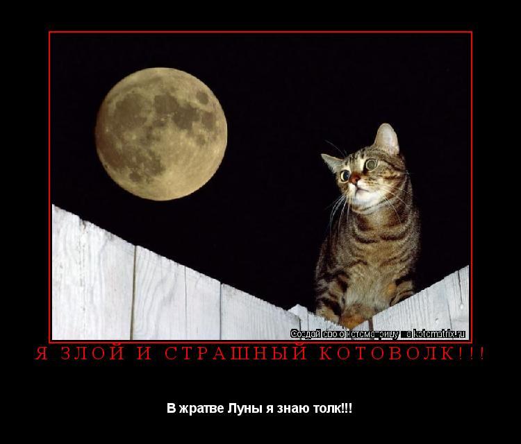 Котоматрица: я злой и страшный КОТОВОЛК!!! В жратве Луны я знаю толк!!!