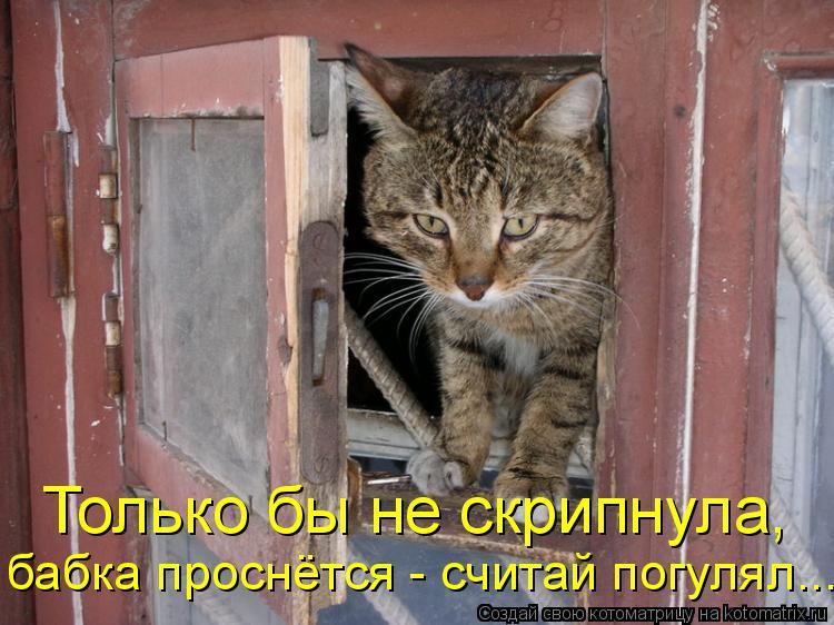 Котоматрица: Только бы не скрипнула,  бабка проснётся - считай погулял...