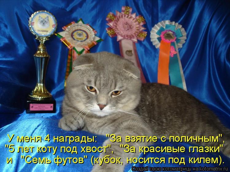 """Котоматрица: """"5 лет коту под хвост"""",  """"За красивые глазки""""  и   """"Семь футов"""" (кубок, носится под килем). У меня 4 награды:   """"За взятие с поличным"""","""
