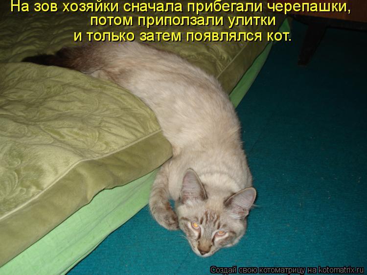 Котоматрица: На зов хозяйки сначала прибегали черепашки,  потом приползали улитки  и только затем появлялся кот.