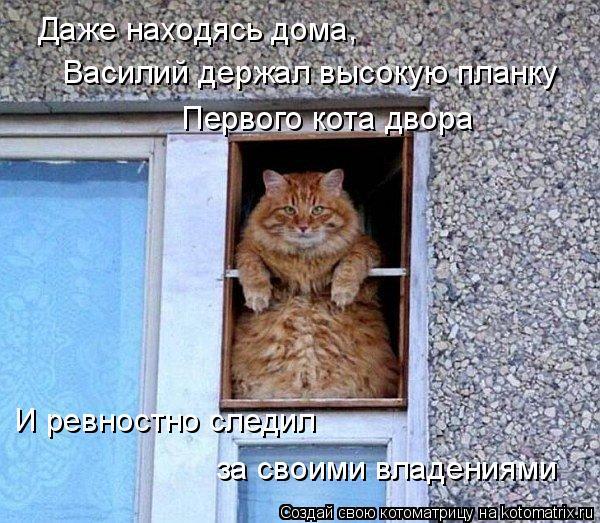 Котоматрица: Даже находясь дома,  Василий держал высокую планку Первого кота двора И ревностно следил за своими владениями