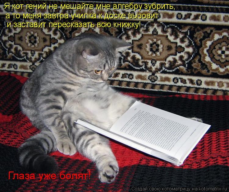Котоматрица: Я кот гений не мешайте мне алгебру зубрить, а то меня завтра училка к доске вызовит и заставит пересказать всю книжку! Глаза уже болят!