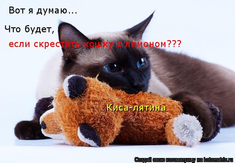 Котоматрица: Вот я думаю... Что будет, если скрестить кошку с лимоном??? Киса-лятина