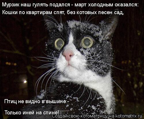 Котоматрица: Мурзик наш гулять подался - март холодным оказался: Кошки по квартирам спят, без котовых песен сад, Птиц не видно в вышине -  Только иней на сп