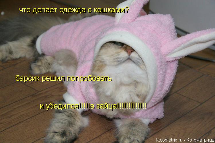 Котоматрица: что делает одежда с кошками? барсик решил попробовать и убедился!!!!!в зайца!!!!!!!!!!!!!