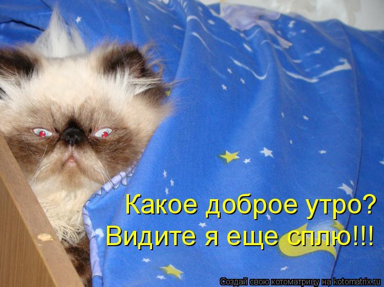 Котоматрица: Какое доброе утро? Видите я еще сплю!!!