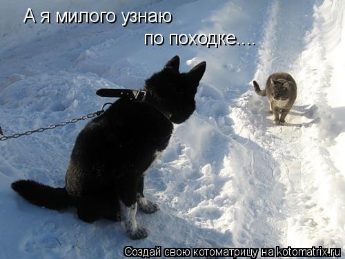Котоматрица: А я милого узнаю  по походке....