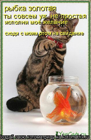 Котоматрица: рыбка золотая  ты совсем уж  не простая  исполни моё желание  сходи с моим ртом на свидание