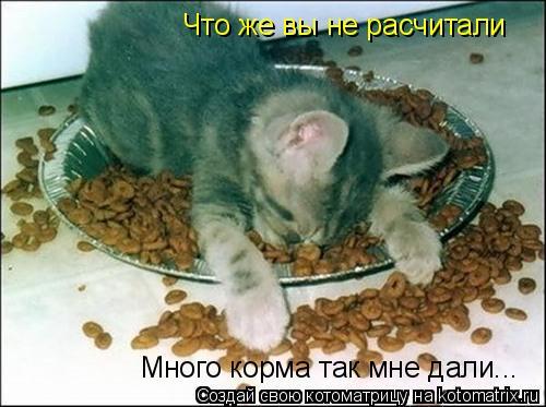 Котоматрица: Что же вы не расчитали Много корма так мне дали...