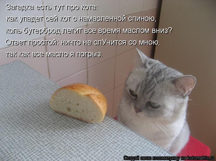 Котоматрица: Загадка есть тут про кота:  как упадет сей кот с намасленной спиною, коль бутерброд летит все время маслом вниз? Ответ простой: ничто не слУч