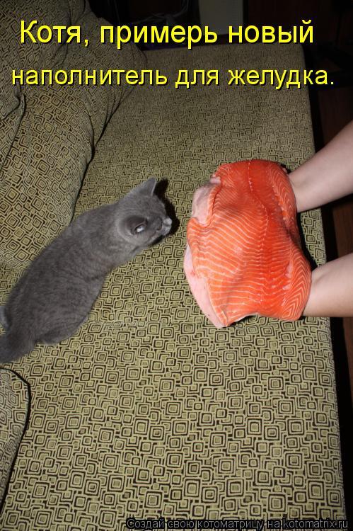Котоматрица: Котя, примерь новый  наполнитель для желудка.