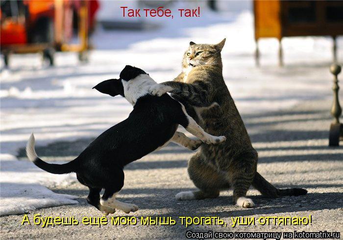Котоматрица: Так тебе, так! А будешь ещё мою мышь трогать, уши оттяпаю!