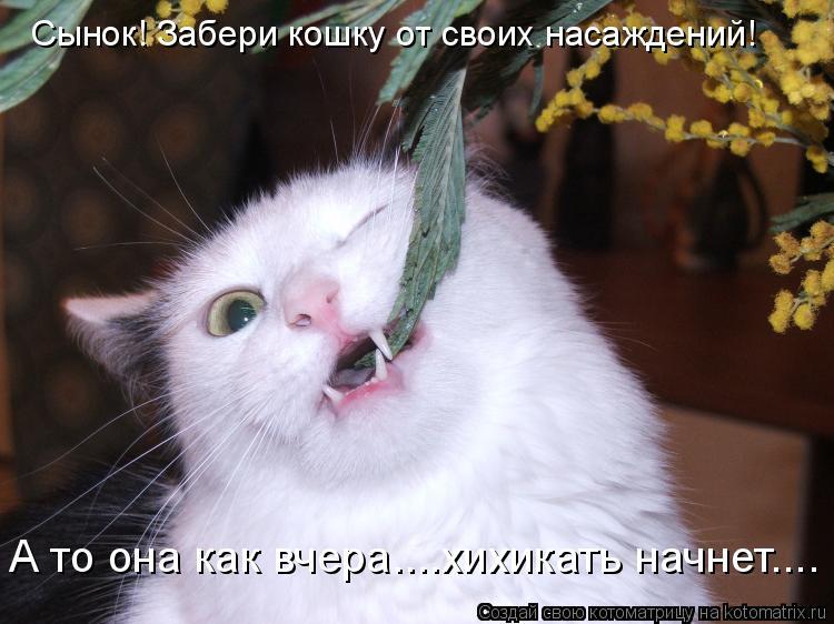 Котоматрица: Сынок! Забери кошку от своих насаждений! А то она как вчера....хихикать начнет....