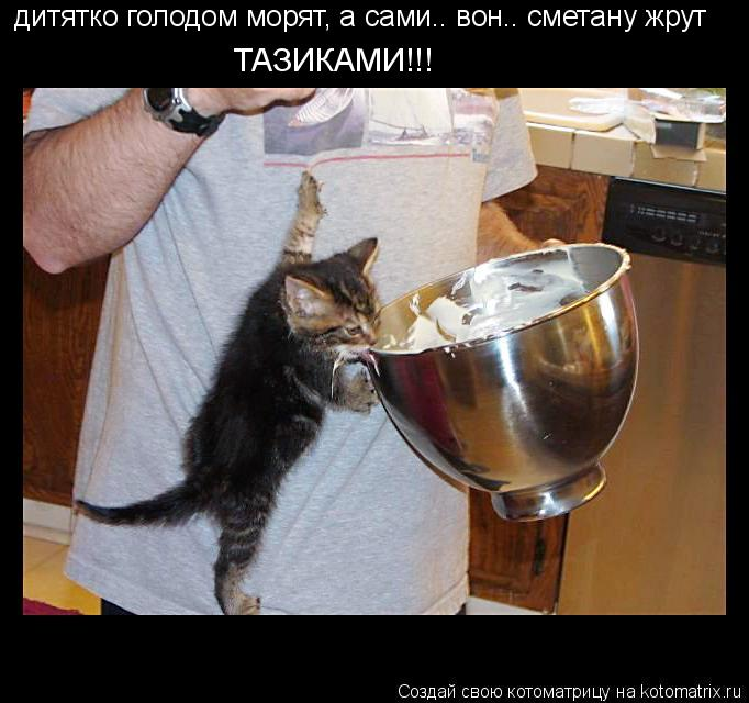 Котоматрица: дитятко голодом морят, а сами.. вон.. сметану жрут ТАЗИКАМИ!!!
