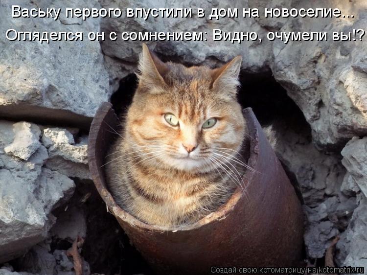 Котоматрица: Огляделся он с сомнением: Видно, очумели вы!? Ваську первого впустили в дом на новоселие...