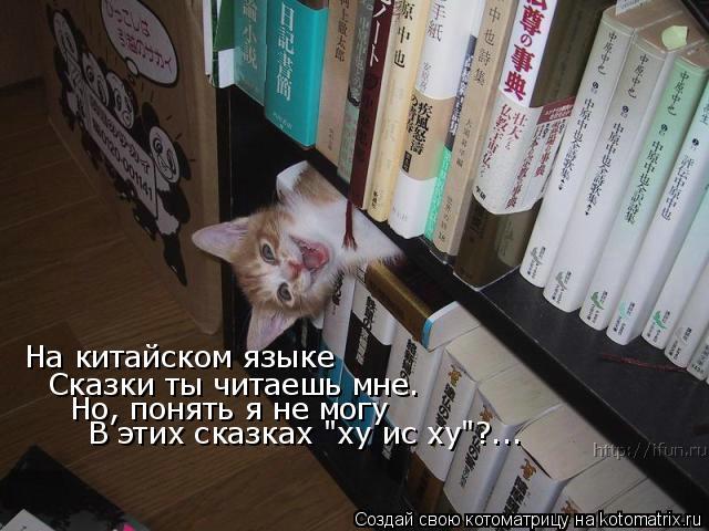 """Котоматрица: На китайском языке Сказки ты читаешь мне. Но, понять я не могу В этих сказках """"ху ис ху""""?..."""
