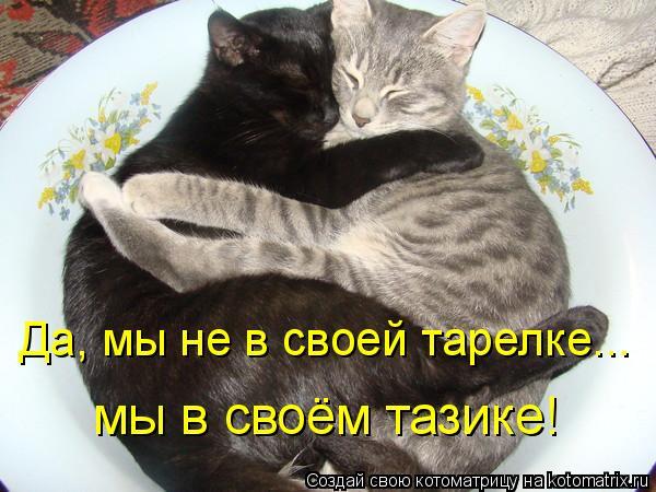 Котоматрица: Да, мы не в своей тарелке...  мы в своём тазике!