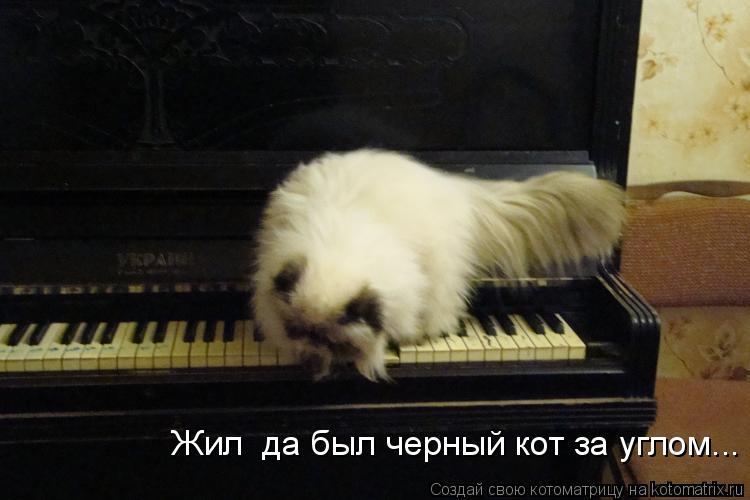 Котоматрица: Жил  да был черный кот за углом...