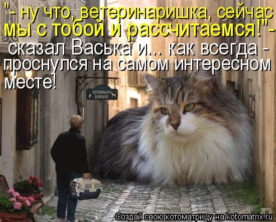"""Котоматрица: """"- ну что, ветеринаришка, сейчас мы с тобой и рассчитаемся!""""- сказал Васька и... как всегда -  проснулся на самом интересном месте месте!"""