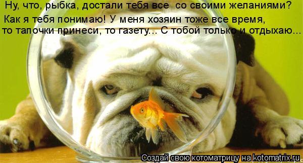 Котоматрица: Ну, что, рыбка, достали тебя все  со своими желаниями?  Как я тебя понимаю! У меня хозяин тоже все время,  то тапочки принеси, то газету….. С тоб